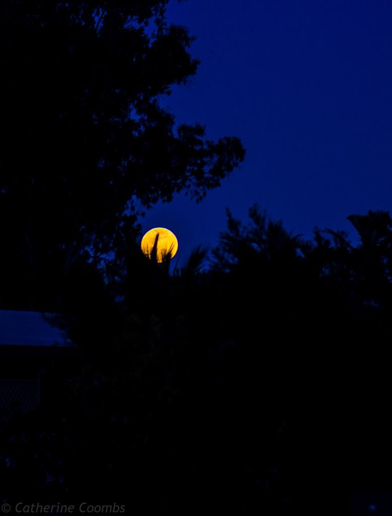 Blood Moon Rising - October 2014