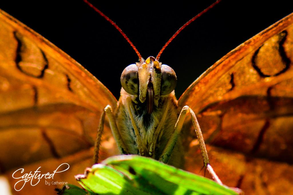 Butterfly Cairns